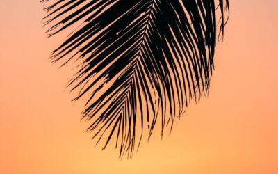 Hot Hawaii Real Estate Opportunities in Kihei