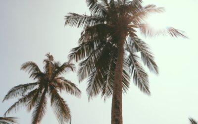 Live a Life of Abundance at Beachfront Maalaea Surf Condo Resort