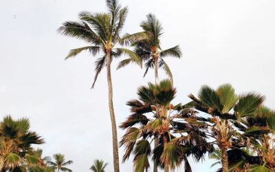 Top Hawaii Condos for Sale at Maui Kamaole